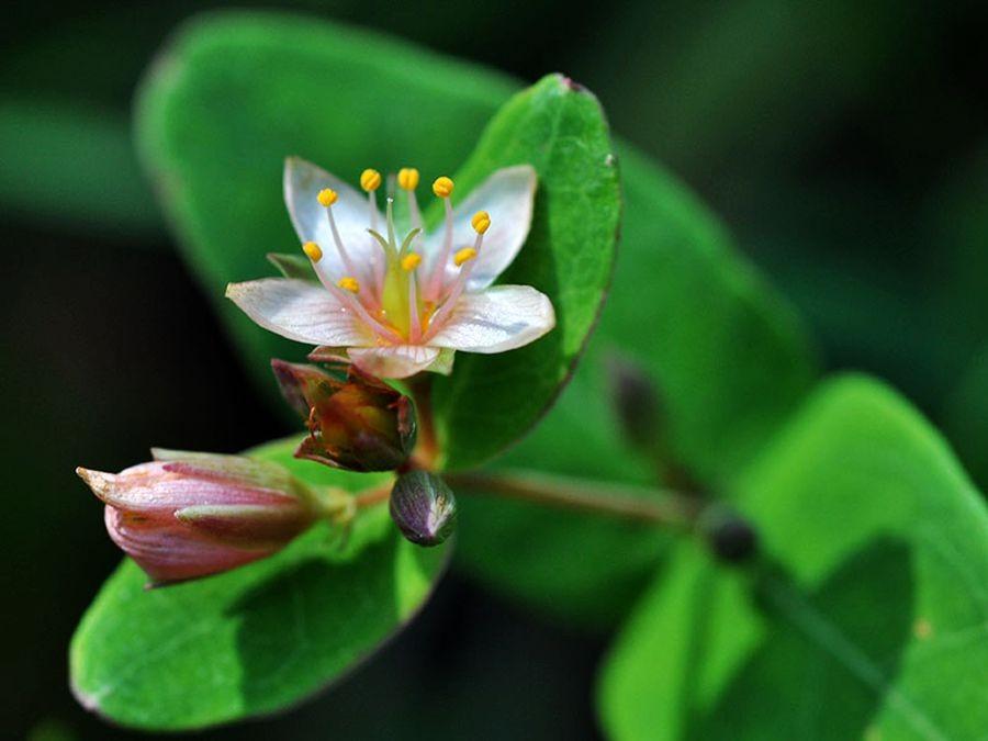 植物园花卉搜集-2_图1-1