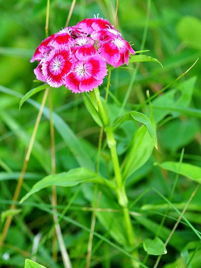 植物园花卉搜集-2_图1-4