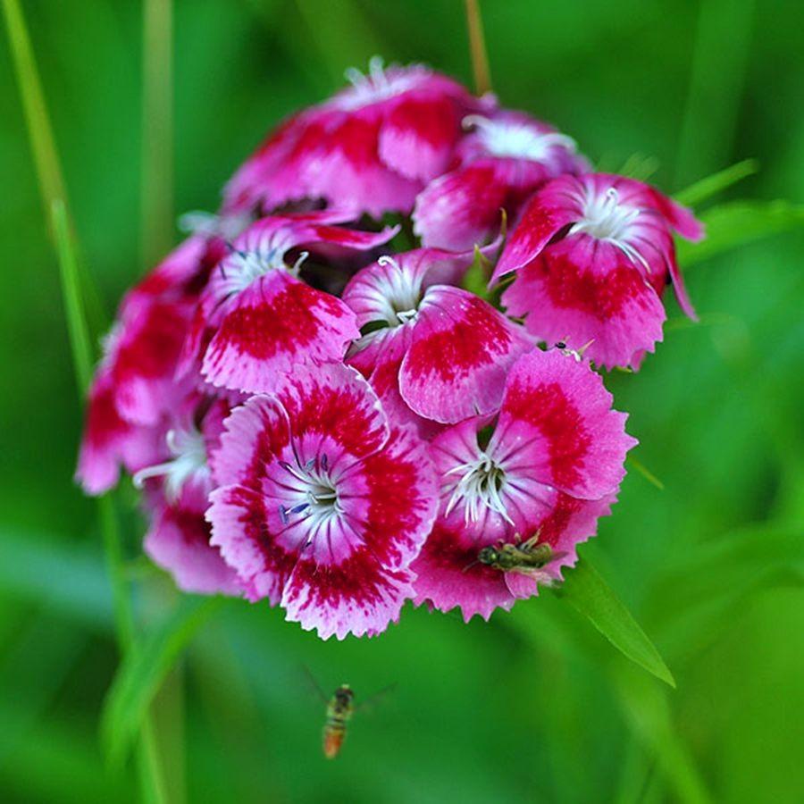 植物园花卉搜集-2_图1-5