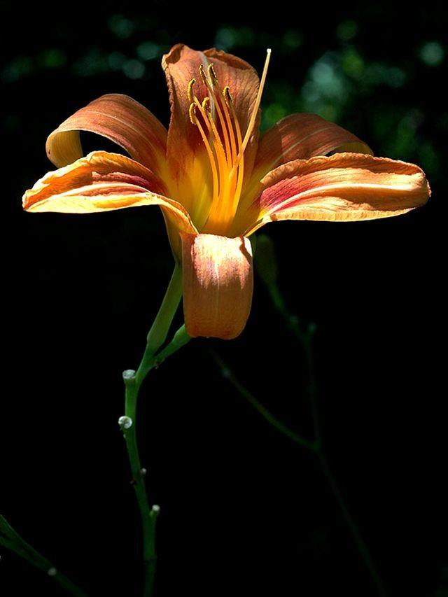 植物园花卉搜集-2_图1-6