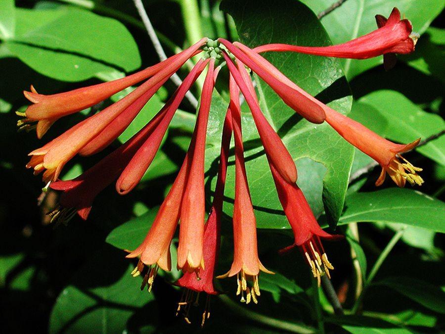 植物园花卉搜集-2_图1-7