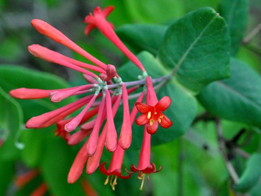 植物园花卉搜集-2_图1-8