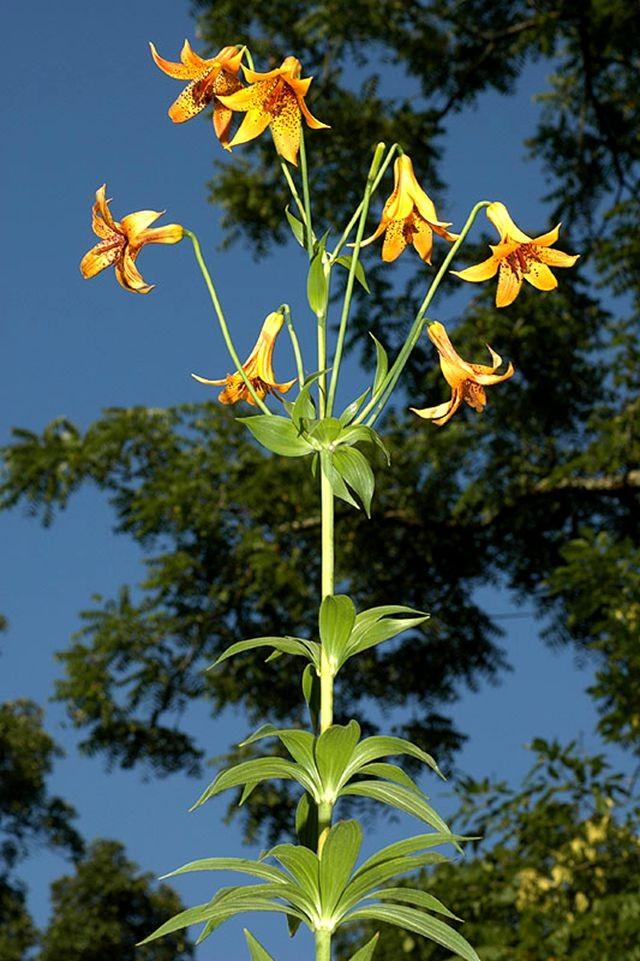 植物园花卉搜集-2_图1-9