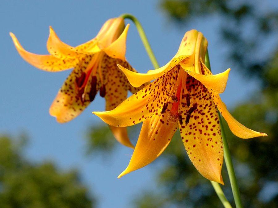 植物园花卉搜集-2_图1-10