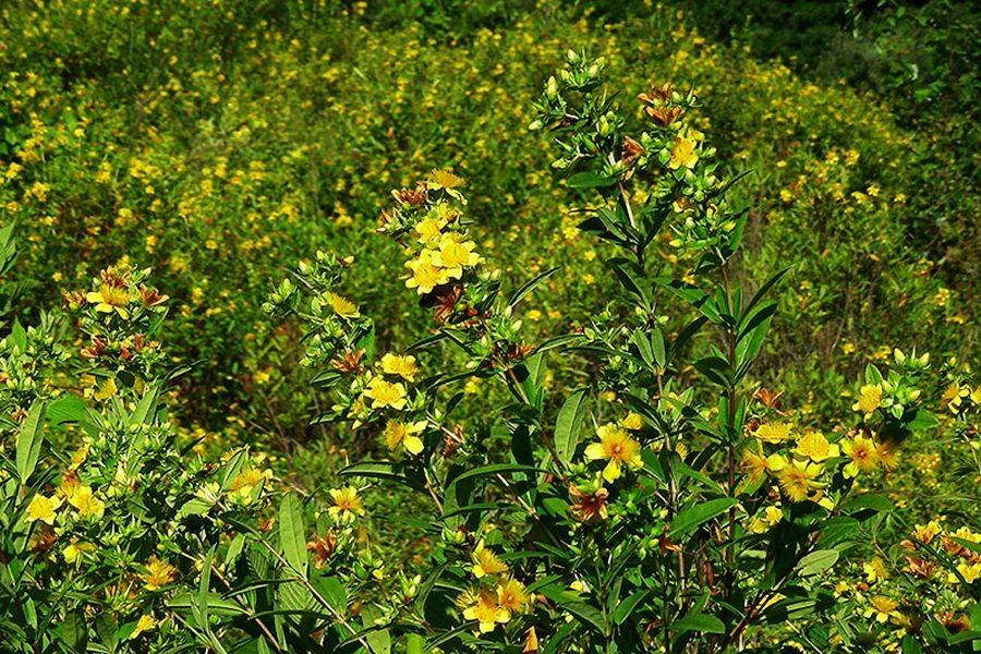 植物园花卉搜集-2_图1-27