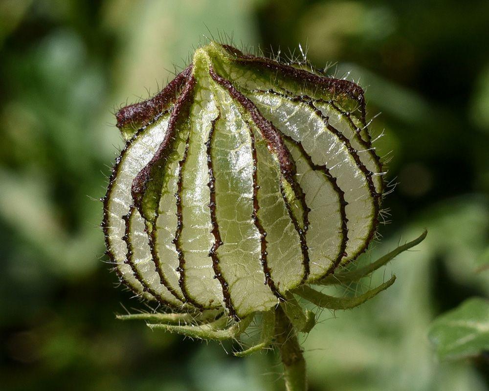 植物园花卉搜集-2_图1-20
