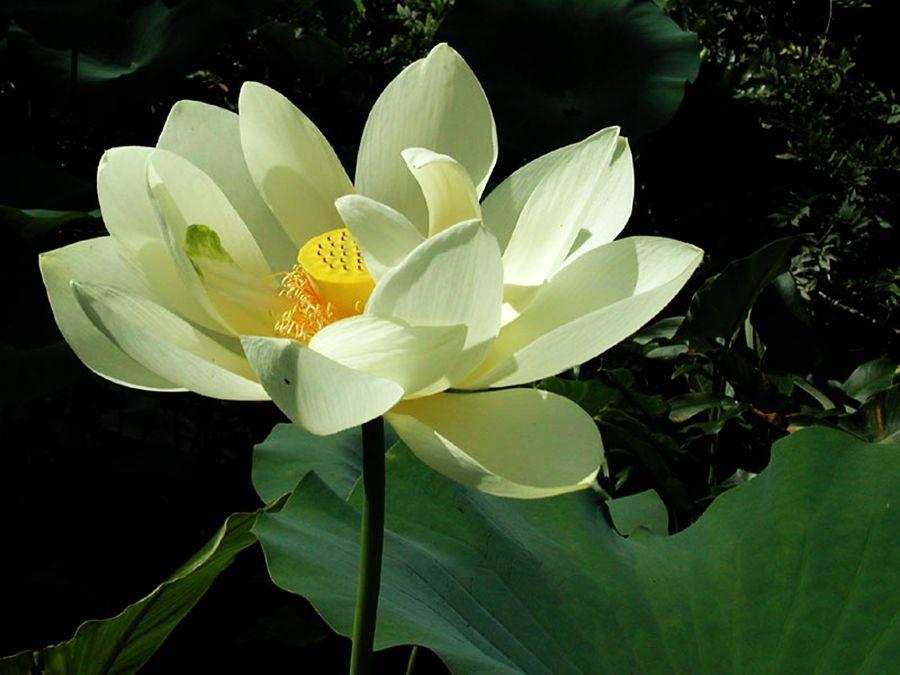 植物园花卉搜集-2_图1-24