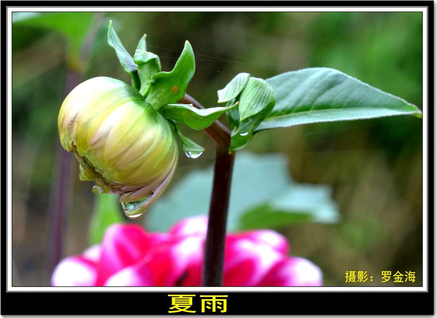 夏雨(七律)_图1-1