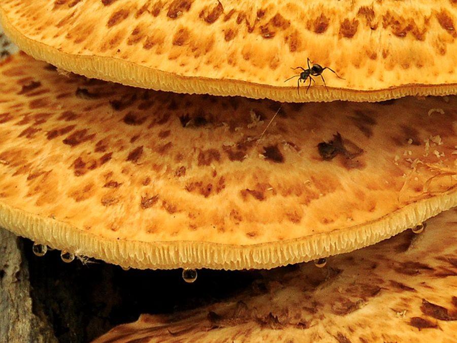蘑菇与地菌_图1-3