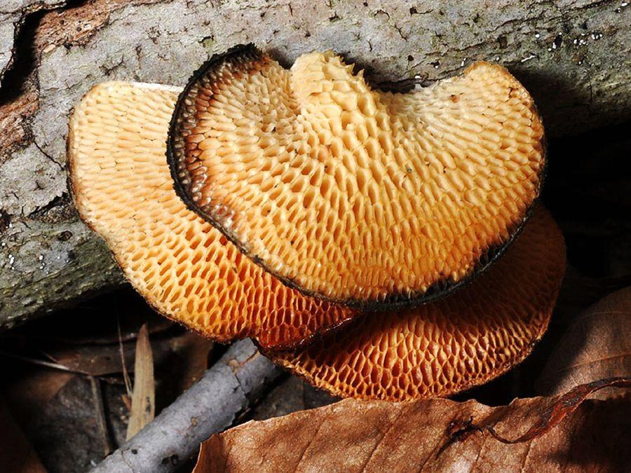 蘑菇与地菌_图1-6