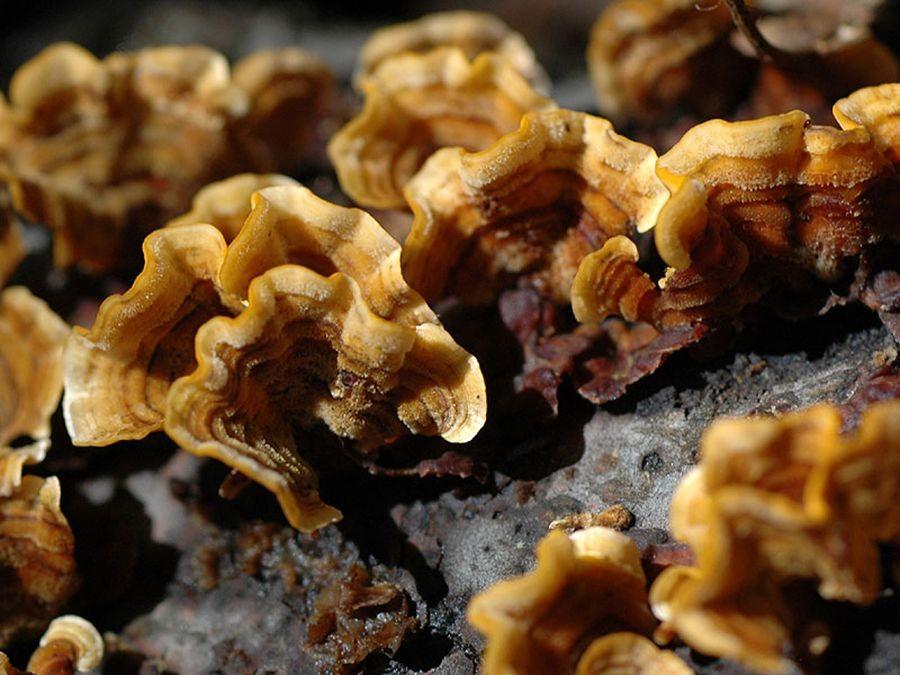 蘑菇与地菌_图1-9