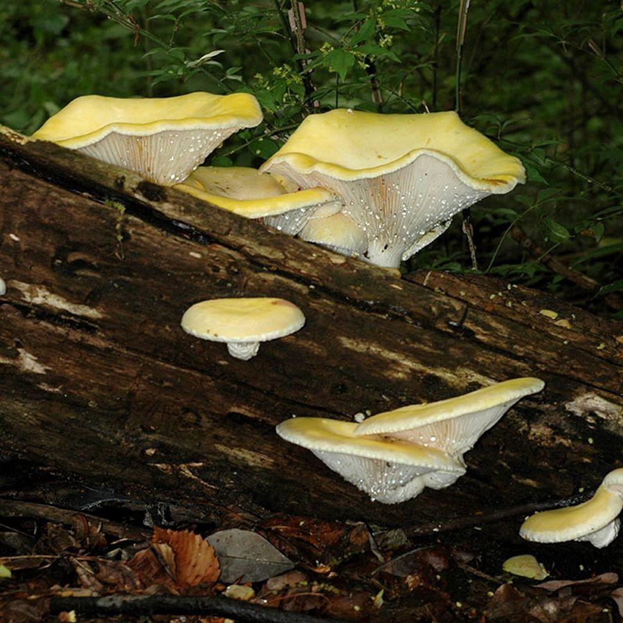 蘑菇与地菌_图1-12