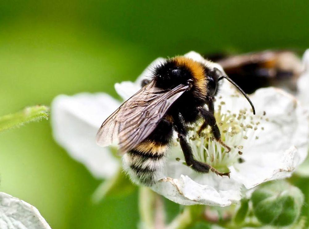 蜜蜂-授粉的功臣_图1-9