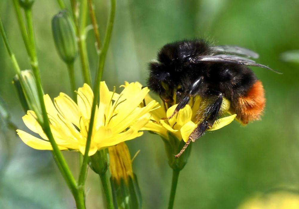 蜜蜂-授粉的功臣_图1-12