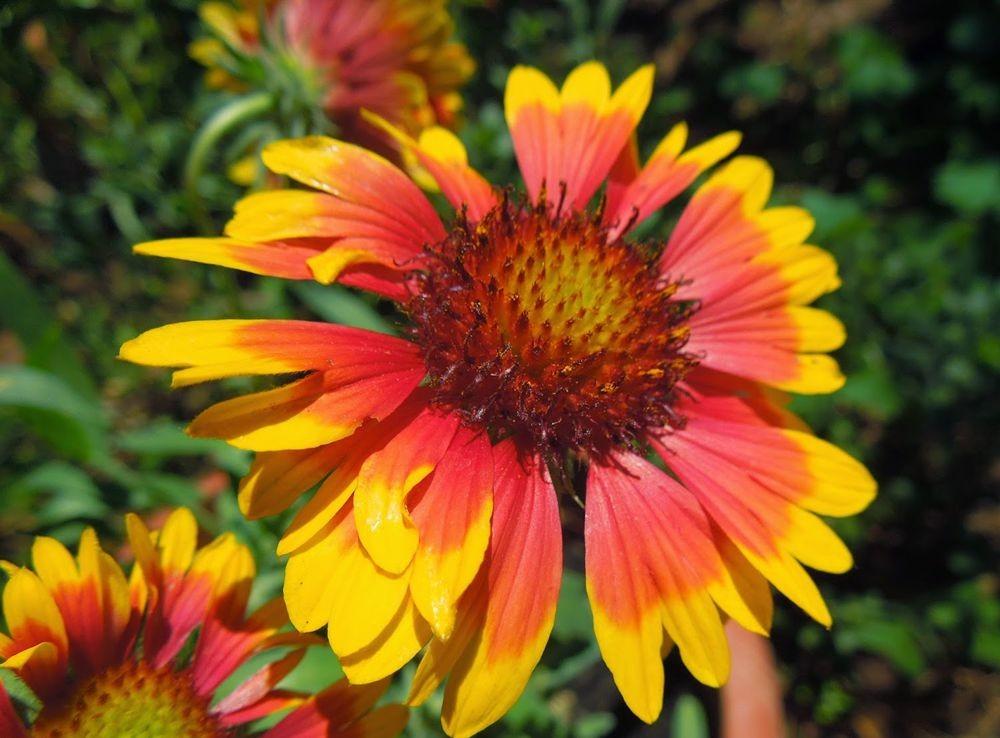 花卉日记-50_图1-1