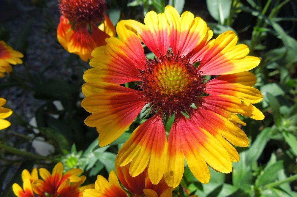 花卉日记-50_图1-2