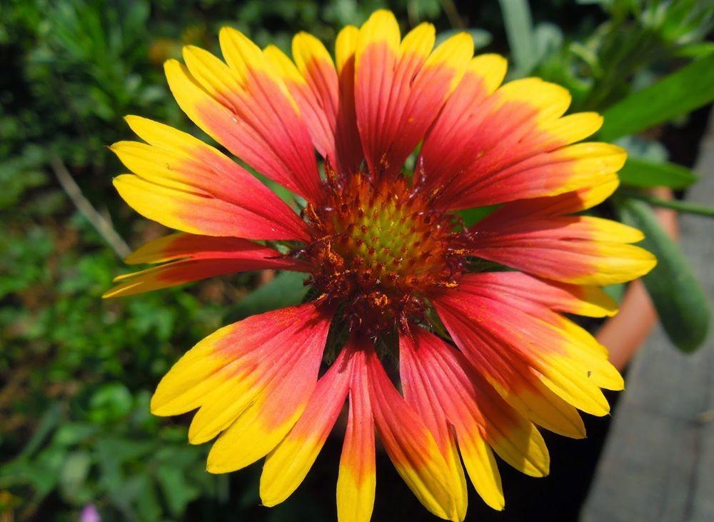 花卉日记-50_图1-3