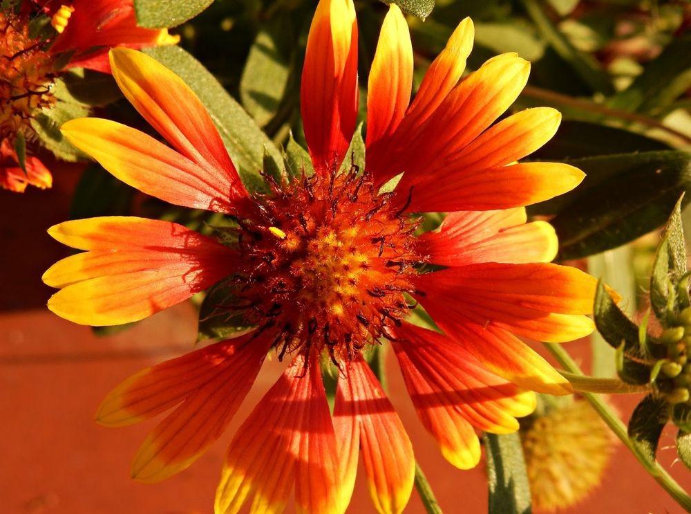 花卉日记-50_图1-4