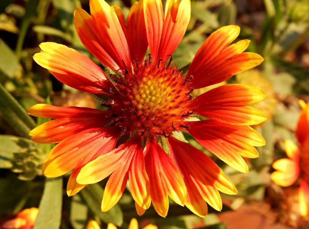花卉日记-50_图1-5