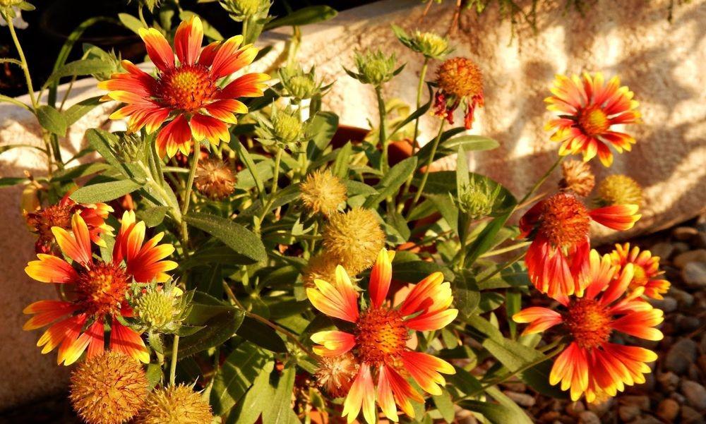 花卉日记-50_图1-6