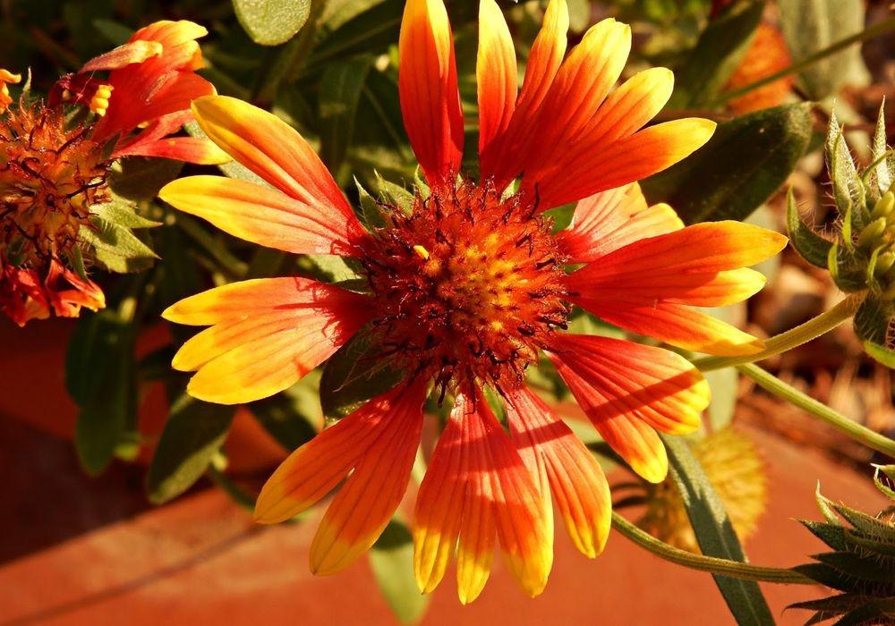 花卉日记-50_图1-7
