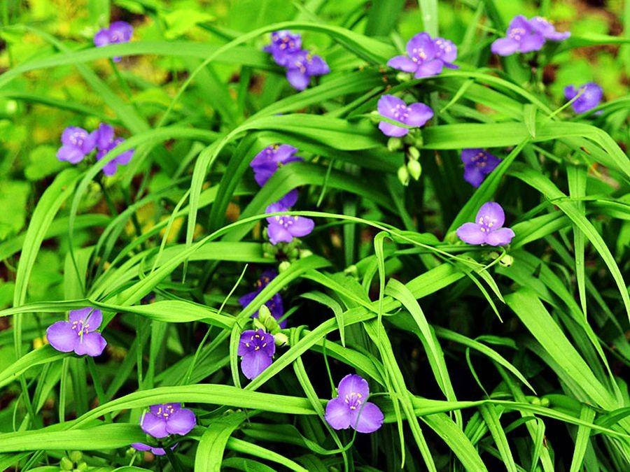 花卉日记-50_图1-10