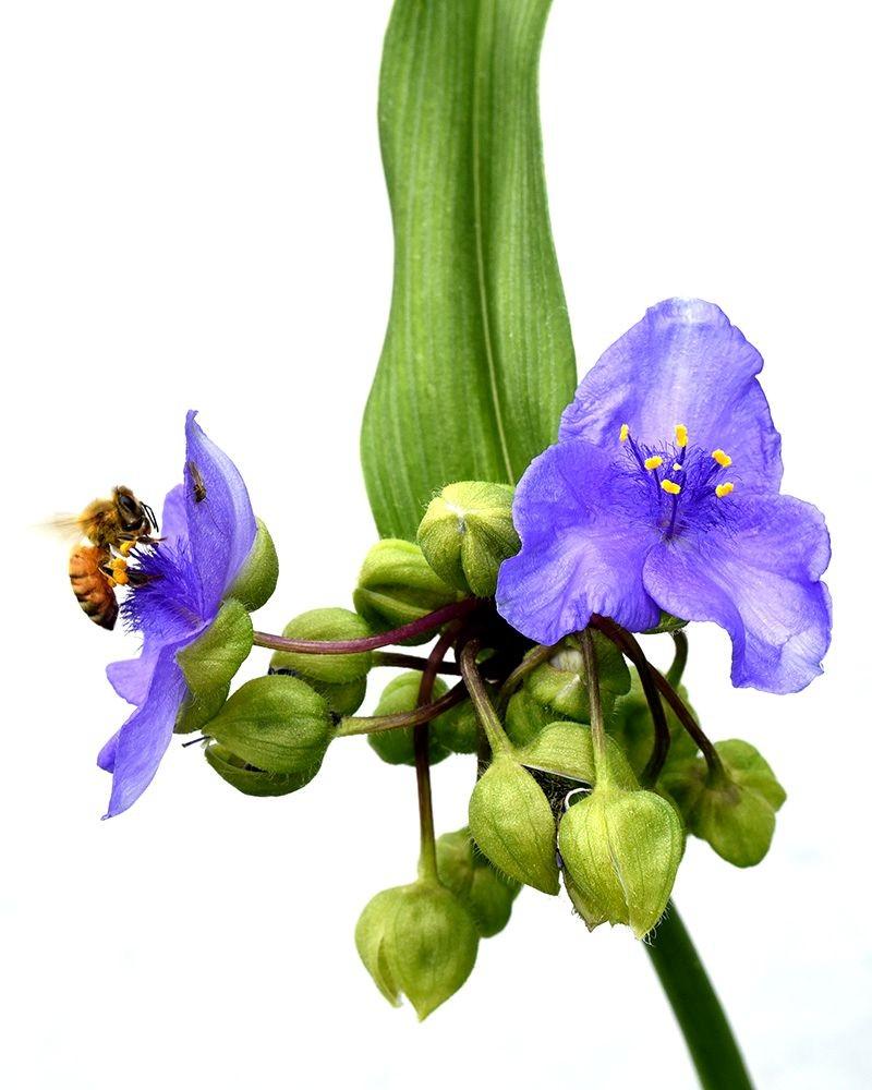 花卉日记-50_图1-13