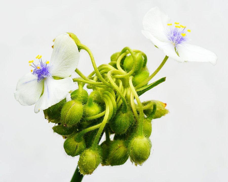 花卉日记-50_图1-14