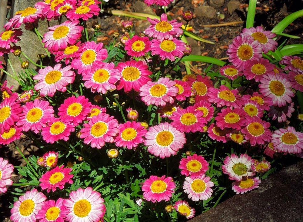 花卉日记-50_图1-18