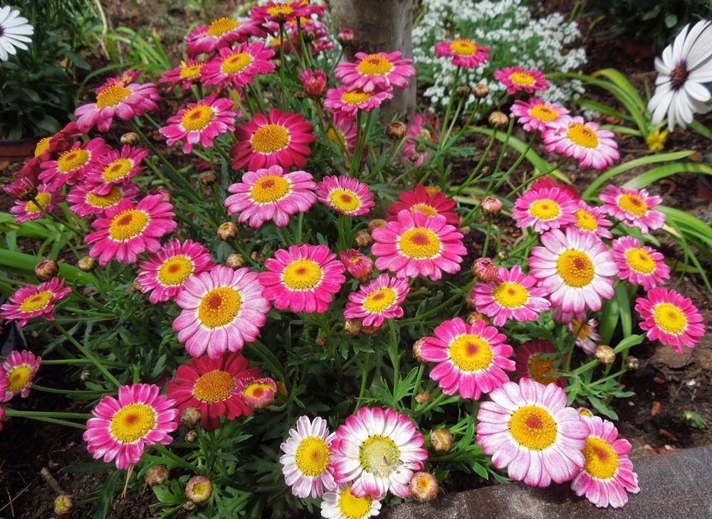 花卉日记-50_图1-19