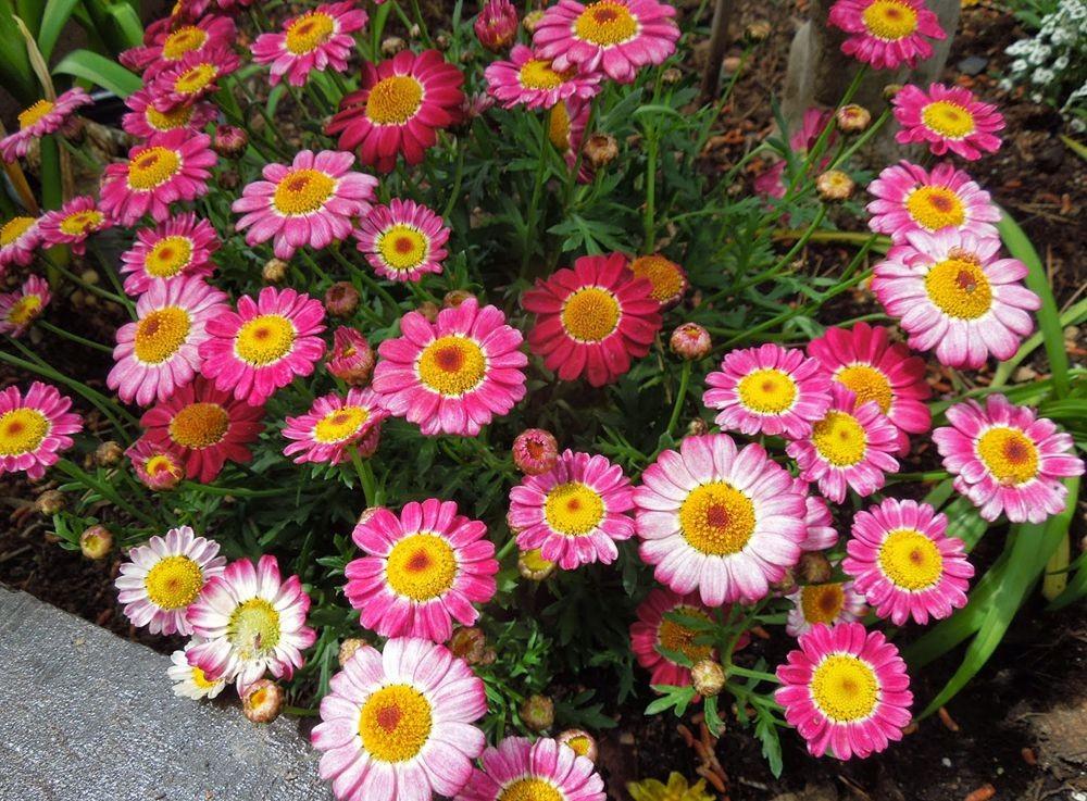花卉日记-50_图1-20