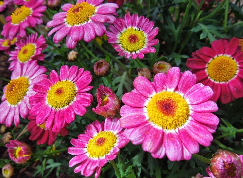 花卉日记-50_图1-21