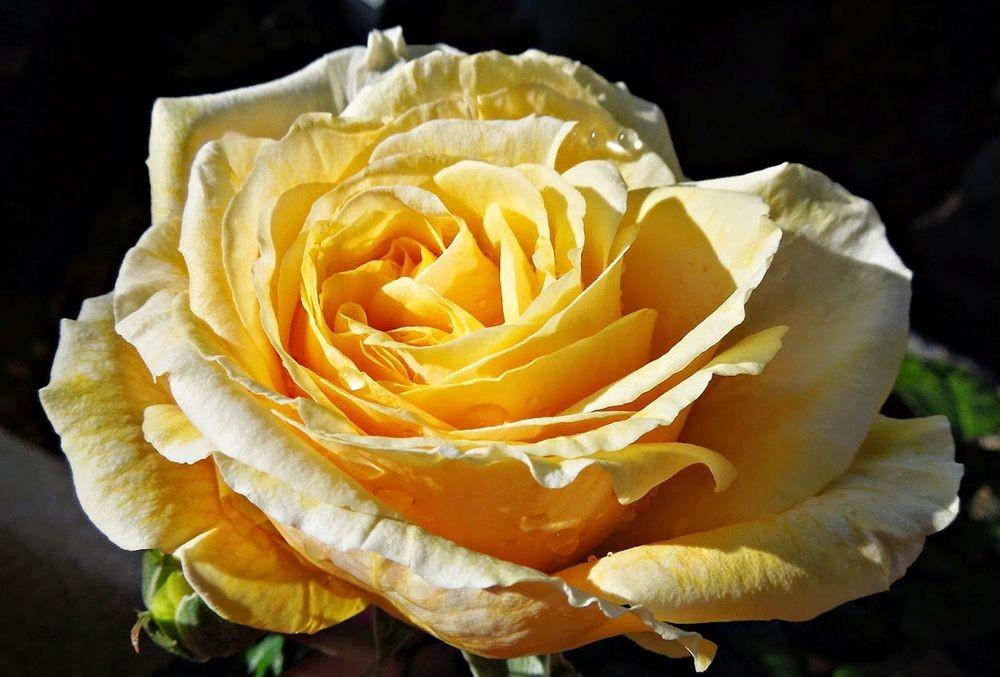 花卉日记-50_图1-22