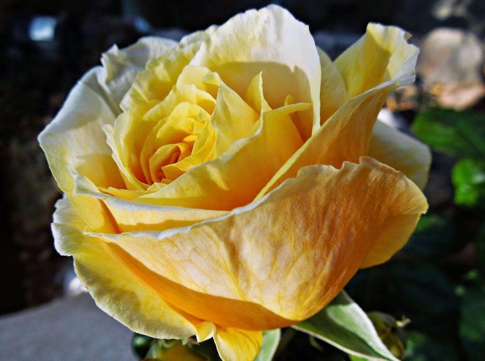 花卉日记-50_图1-23