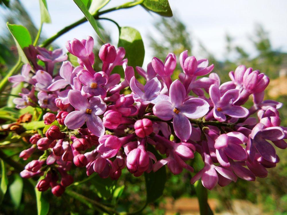 花卉日记-51_图1-4
