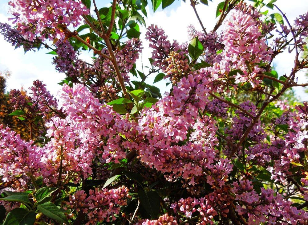 花卉日记-51_图1-8