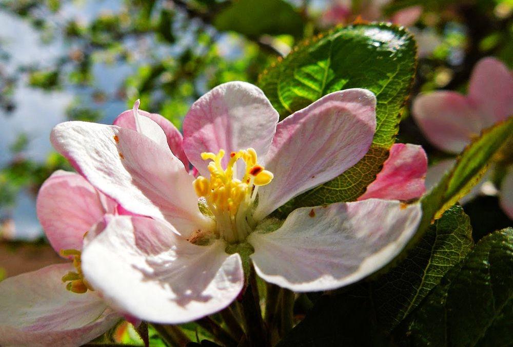 花卉日记-51_图1-13