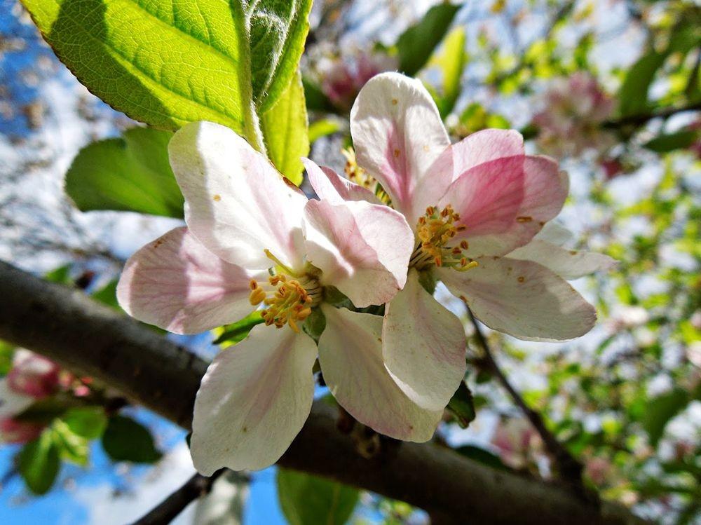 花卉日记-51_图1-14