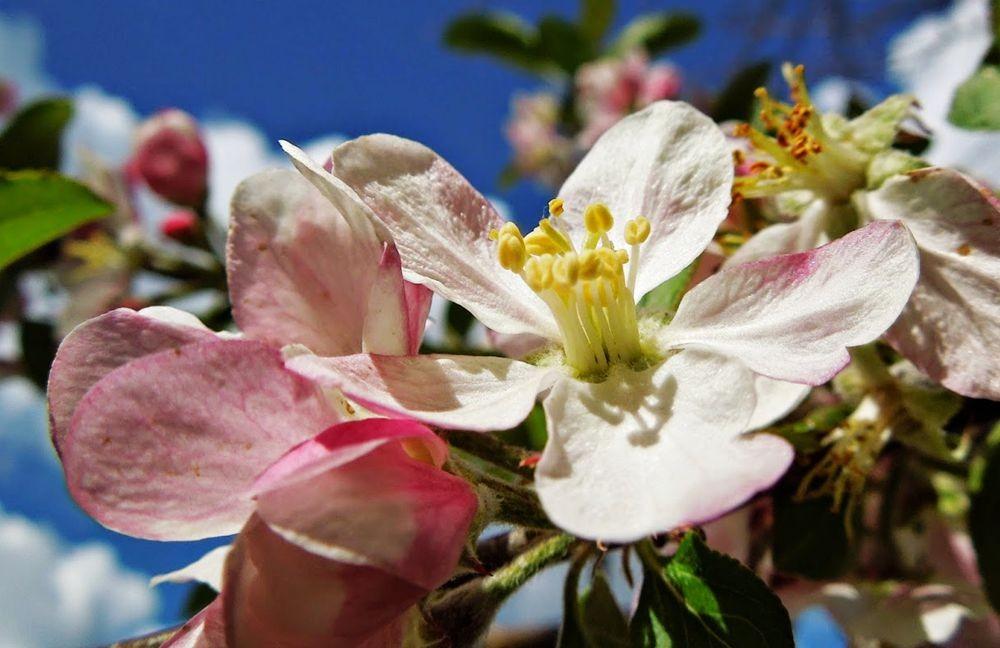 花卉日记-51_图1-15