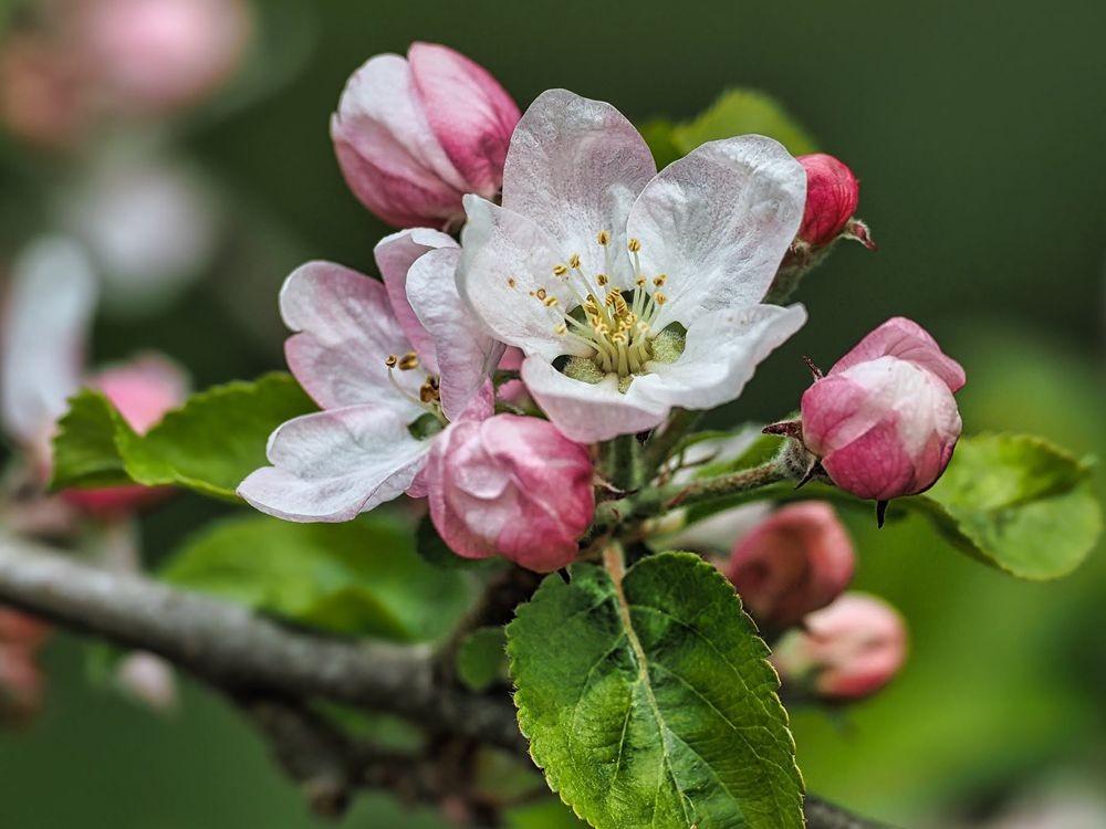花卉日记-51_图1-16