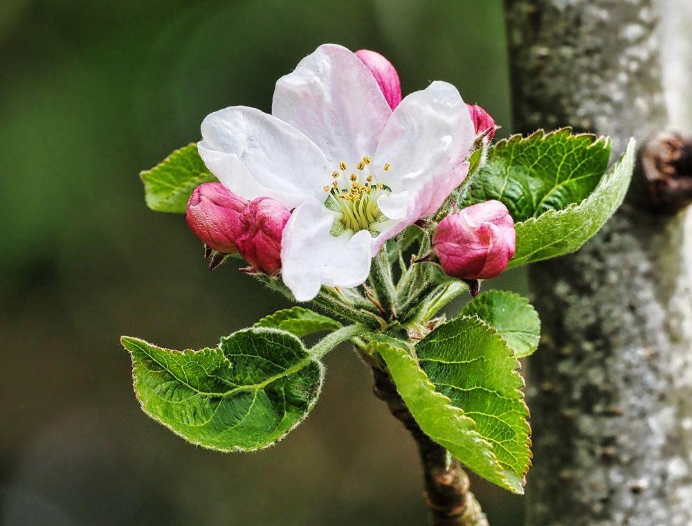 花卉日记-51_图1-17
