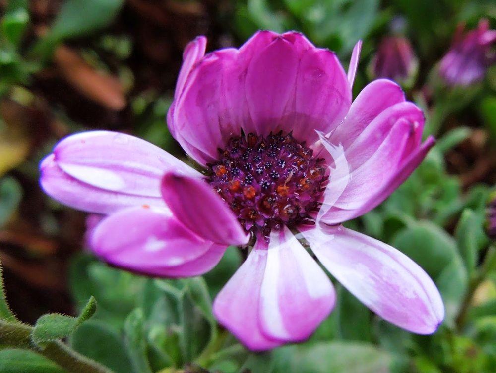花卉日记-51_图1-19