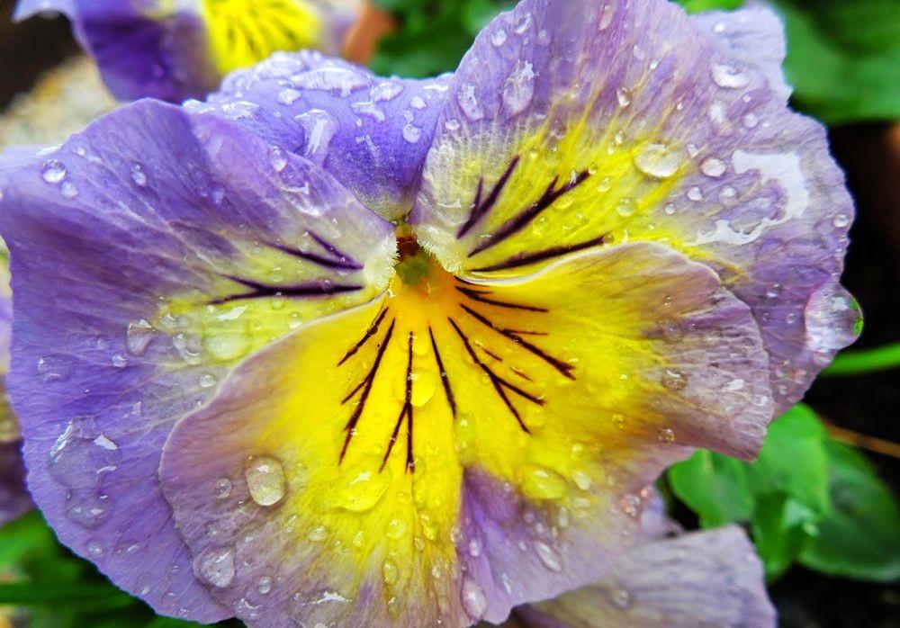 花卉日记-51_图1-20