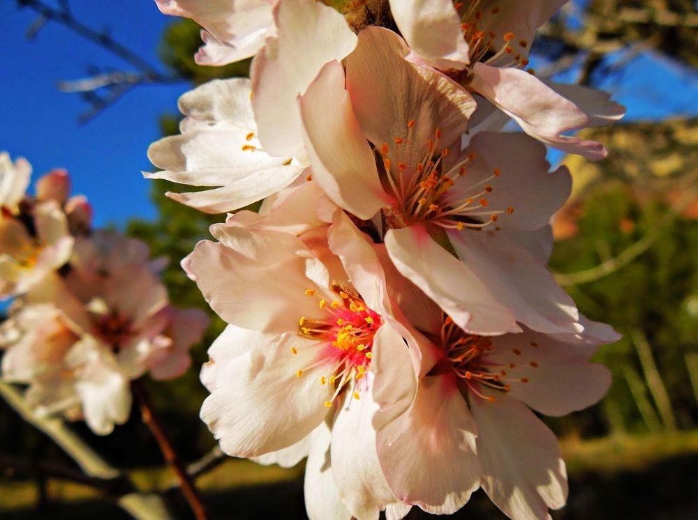 花卉日记-51_图1-22