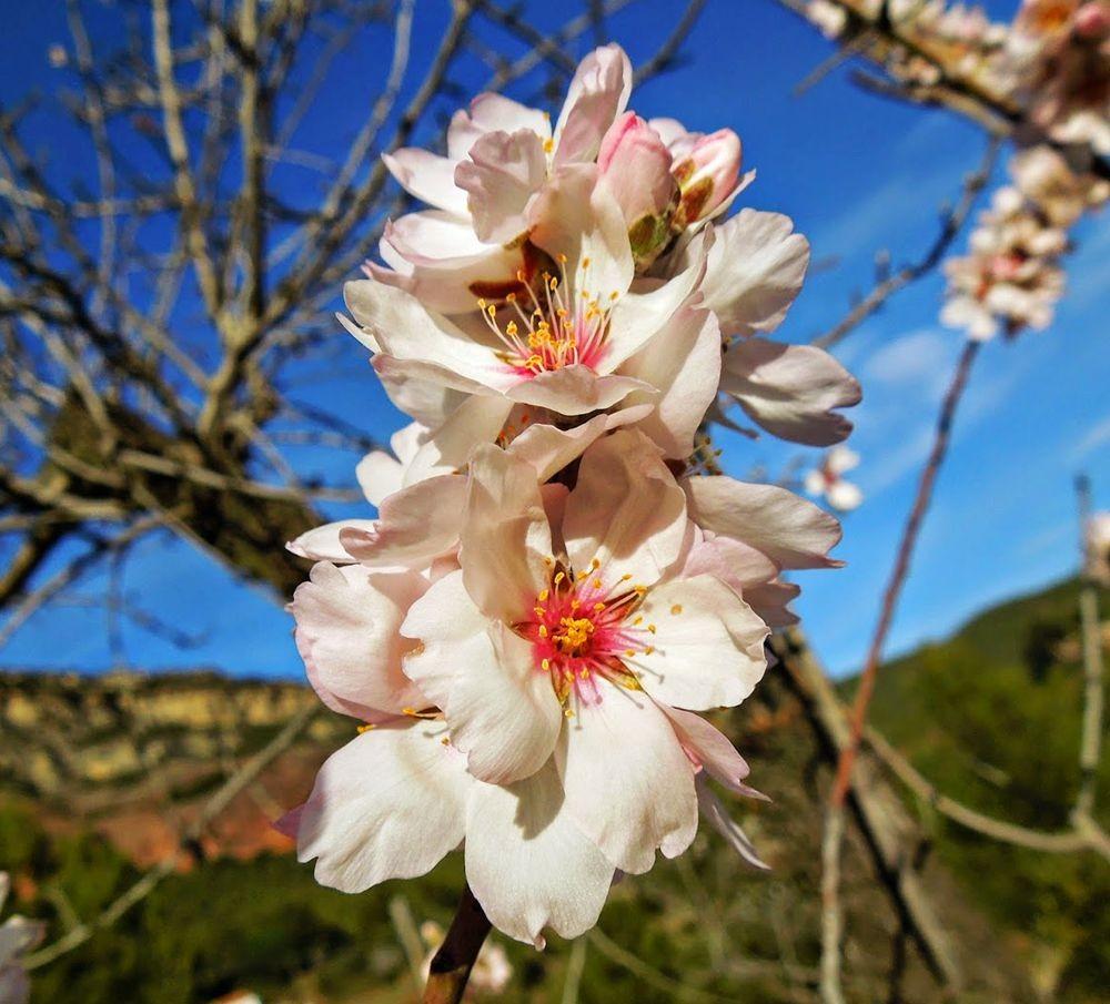 花卉日记-51_图1-23