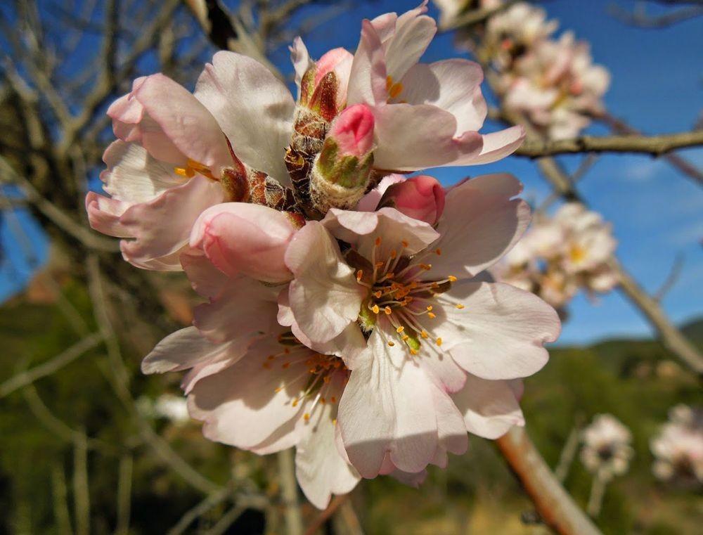 花卉日记-51_图1-24