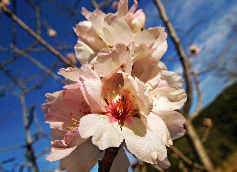 花卉日记-51_图1-25