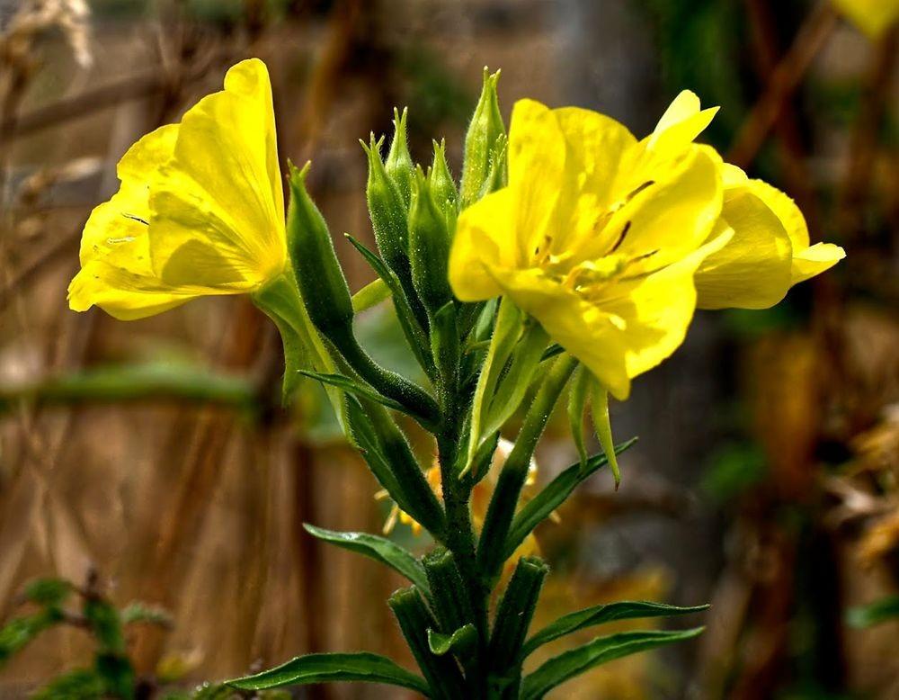 花卉日记-51_图1-26