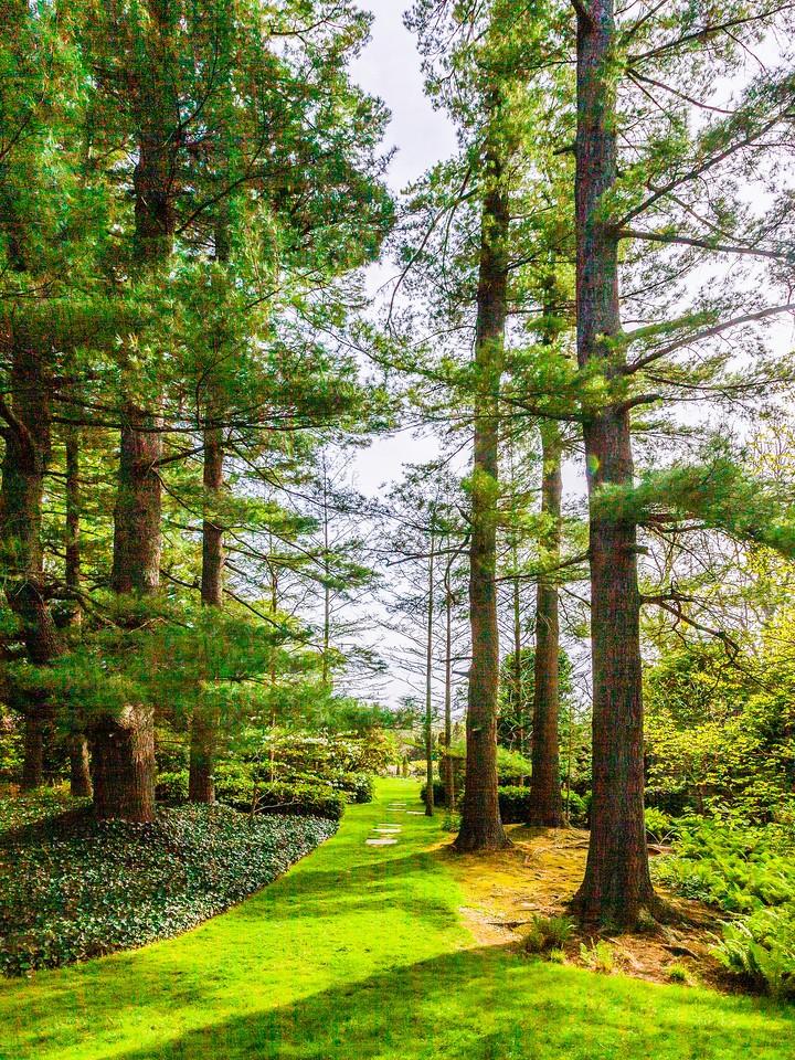 Chanticleer花园,春天的脚步_图1-1