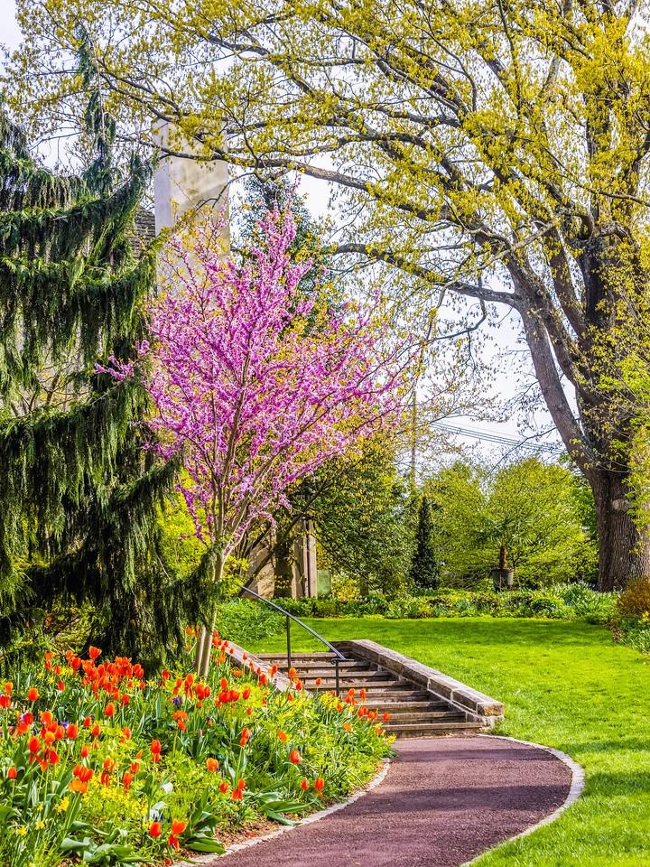 Chanticleer花园,春天的脚步_图1-7